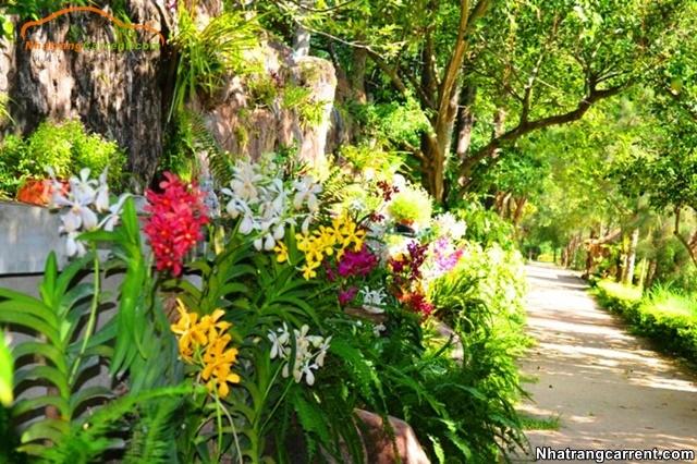 orchids in Hoa Lan Island Resort Nha Trang